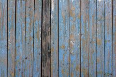 Gray yellow old fence wall of wooden planks with blue peeling paint and cracks and one dark board. vertical lines. rough surface. A gray yellow old fence wall of stock photo