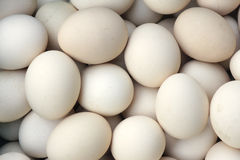 Grayish eggs Royalty Free Stock Images