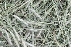 Grayish hay Stock Images