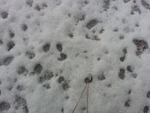 Grayish white snow on floor with colored dots. A photo for texture and background abstract stock image