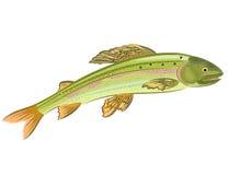 Grayling, σολομός-αρπακτικά ψάρια Στοκ Φωτογραφίες
