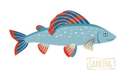 Grayling, vector cartoon illustration Royalty Free Stock Images