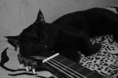 Grayscale cat. Cat sleeps on the guitar in grayscale Stock Image