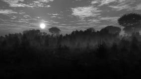Grayscale Dark Landscape Environment Stock Photography