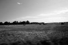 Grayscale Landscape Photography of Field Royalty Free Stock Images