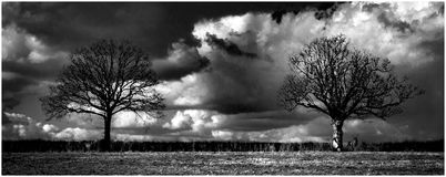Grayscale Landscape Photography of Two Trees Stock Images