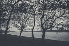 Grayscale Photo of Bare Trees Near Body of Water during Daytime Royalty Free Stock Images