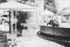 Grayscale Photo of Bird on Water Fountain Stock Photos
