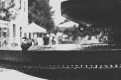 Grayscale Photo of Bird on Water Fountain Royalty Free Stock Photography