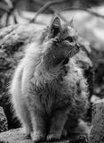 Grayscale Photo of Cat Royalty Free Stock Photo