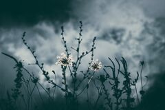 Grayscale Photo of Flower Stock Photos