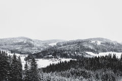 Grayscale Photo of Foggy Covered Forest Mountain Royalty Free Stock Photography