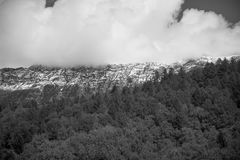 Grayscale Photo of Forest Royalty Free Stock Images