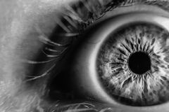 Grayscale Photo of Human Eye Stock Photo