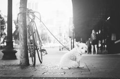 Grayscale Photo of Leashed Dog Near Tree Royalty Free Stock Photo