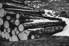 Grayscale Photo of Piled Wood Logs Royalty Free Stock Photos