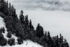 Grayscale Photo Of Pine Trees And Mountain Royalty Free Stock Photography