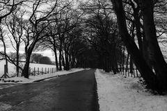 Grayscale Photo of Road in Between Withered Trees Royalty Free Stock Photos