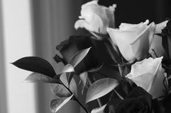 Grayscale Photo of Roses Royalty Free Stock Image