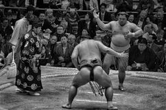Grayscale Photo of Sumo Wrestling Surrounded With People Royalty Free Stock Image