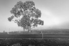 Grayscale Photo of Tree and Grass Field stock image