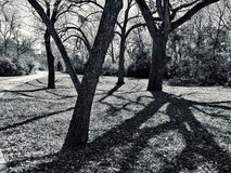 Grayscale Photo of Trees Royalty Free Stock Images
