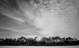 Grayscale Photo of Trees Stock Images