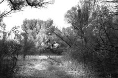 Grayscale Photo of Trees in the Woods Stock Photo