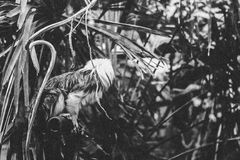 Grayscale Photography of Animal Perching on Metal Near Plants Royalty Free Stock Photos