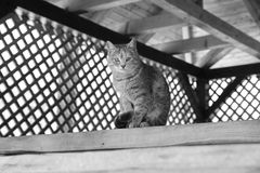 Grayscale Photography of Cat Sitting on Top of Wooden Panel Stock Photos