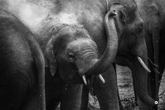 Grayscale Photography of Elephant during Daytime Stock Photo
