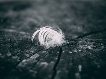 Grayscale Photography of Feather Stock Photo