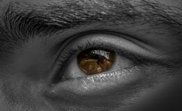 Grayscale Photography of Human Left Eye Stock Photos