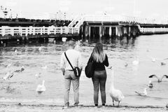 Grayscale Photography of Man and Woman Standing in Front of Swans on Body of Water royalty free stock image
