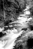 Grayscale Photography of Running River Surrounded Forest during Daytime Stock Images