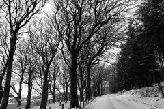 Grayscale Photography of Snow-covered Field and Bare Trees Stock Photo