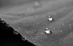 Grayscale Photography of Water Droplets Royalty Free Stock Photography