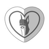 Grayscale silhouette middle shadow sticker with doberman pinscher inside of heart. Vector illustration Stock Photo