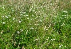 Grayson Highlands Meadow fotos de stock royalty free