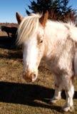 Grayson Highlands State Park fotografia de stock