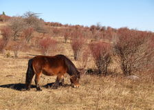 Grayson Highlands State Park foto de stock royalty free