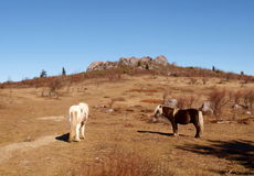 Grayson Highlands State Park fotos de stock royalty free