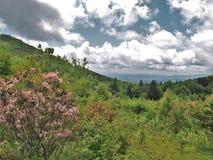 Grayson średniogórzy Podeszczowe chmury i kwiaty Zdjęcie Royalty Free