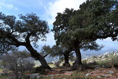 Grazalema βουνά, Ισπανία Στοκ φωτογραφίες με δικαίωμα ελεύθερης χρήσης
