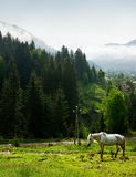 Grazed horse in mountains Stock Photography
