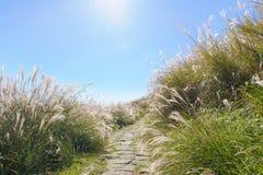 Graziella Dziewicza trawa w jesieni przeciw niebieskiemu niebu Zdjęcia Royalty Free