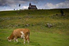 grazing Lizenzfreies Stockfoto