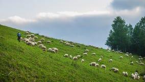 grazing Stock Fotografie