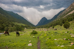 Grazing animals in the mountains. Mountain path on a cloudy day, grazing animals Royalty Free Stock Image