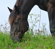 Grazing Stock Images